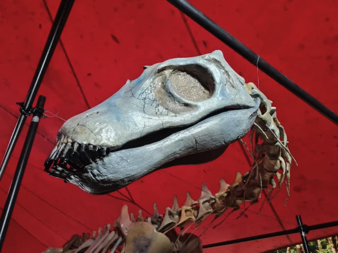 FÓSSEIS INÉDITOS e reprodução do MAIOR crocodiliano do mundo no Museu da Amazônia (MUSA)